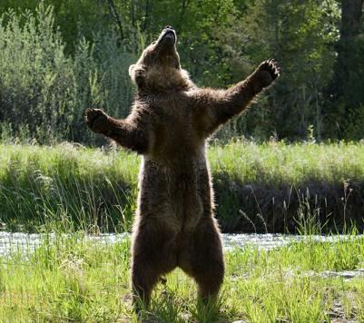 Roaring-Bear.jpg